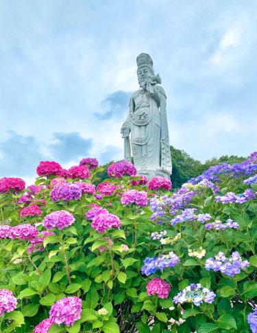 紫陽花と観音様