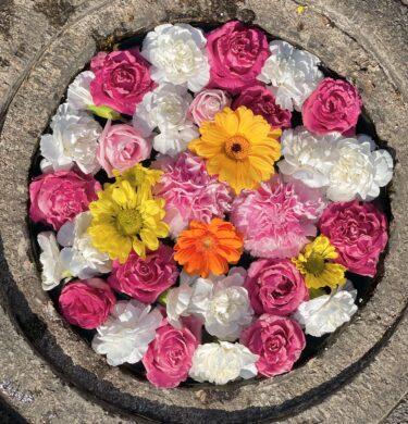 3月6日(土)、7日(日)に永代供養付き個別納骨堂、樹木葬の個別見学会、お墓、永代供養についての説明会を開催します。